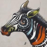 Equus burchellii-5