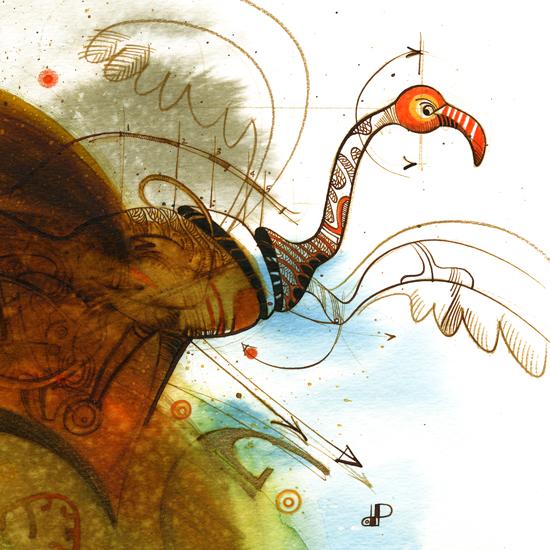 Phœnicopterus ruber ruber-7